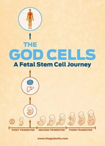 The God Cells - A Fetal Stem Cell Journey