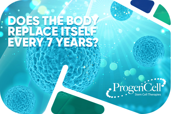 Does the body replace itself every 7 years??